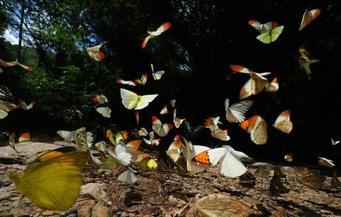 Takehiko Sato_Mysterious World – Magic Nature_Butterflys wild dance in tropical jungle
